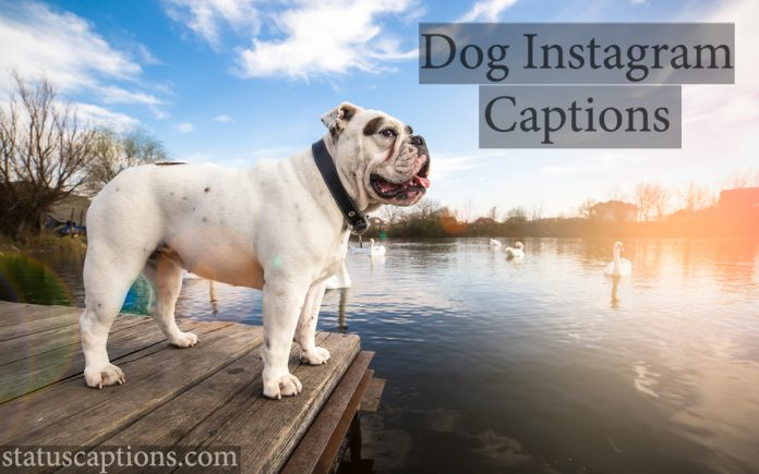 dog instagram captions