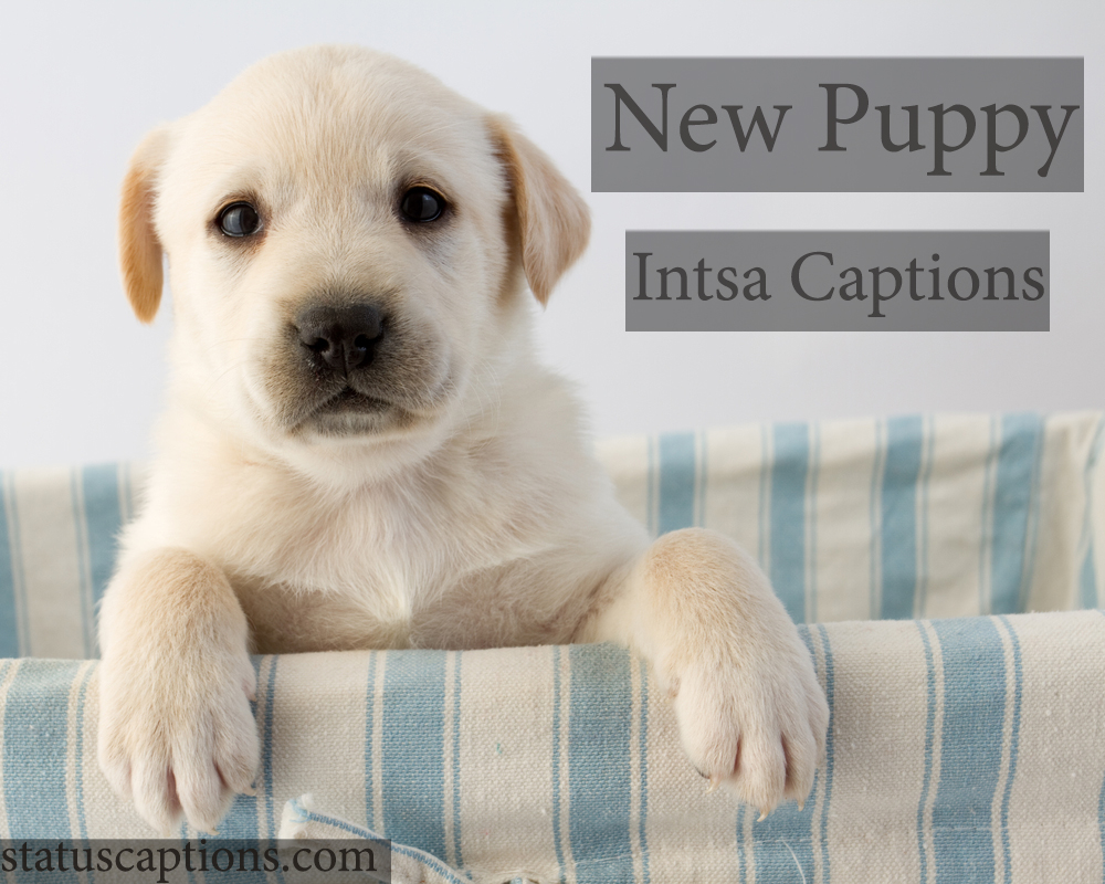 new puppy insta captions