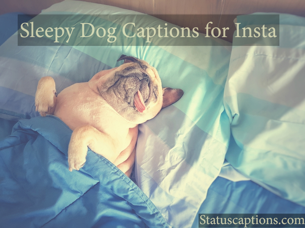 sleepy dog insta captions